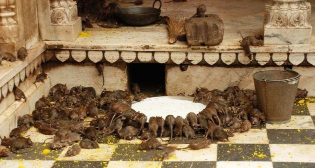 karni-mata-temple-5[2]