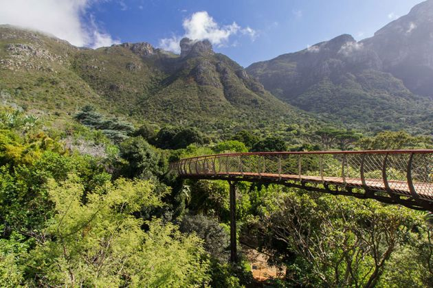 tree-canopy-walkway-path-kirstenbosch-national-botanical-garden-2