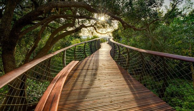 tree-canopy-walkway-path-kirstenbosch-national-botanical-garden-6