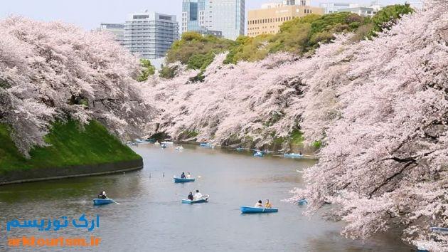 توکیو، ژاپن-chidorigafuchi-sakura-cherry-tree-pink