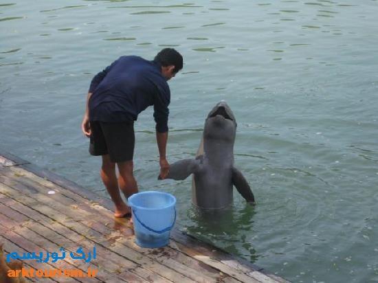دلفین خانه حقیقت