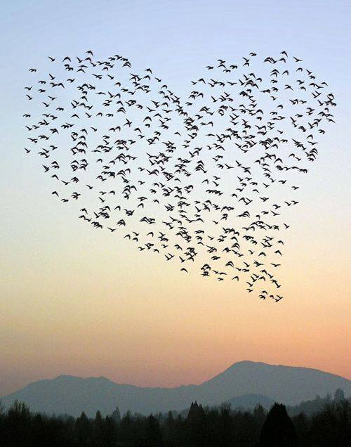 قلب طبیعت (4)