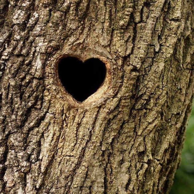 قلب طبیعت (8)