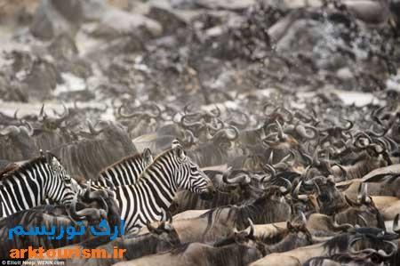 گورخر کنیا