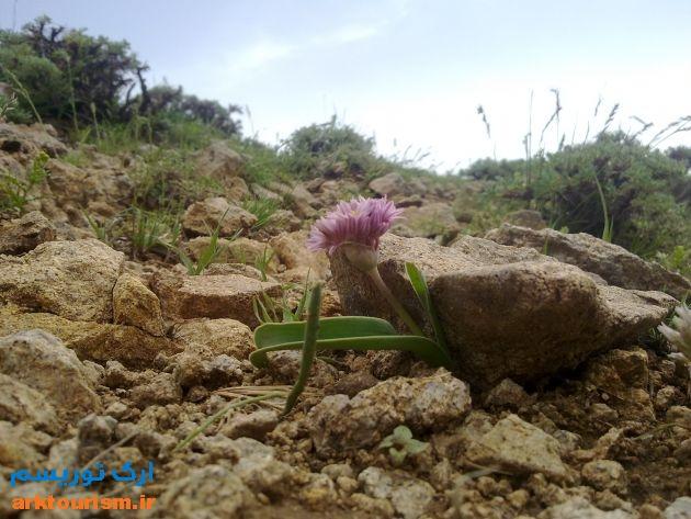 گیاهان دارویی اوکوزداغی