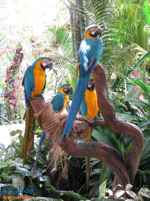 پارک پرندگان سنگاپور