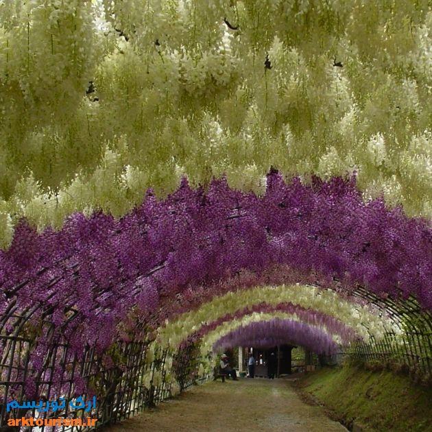 Kawachi-Fuji-Garden-5.توکیو