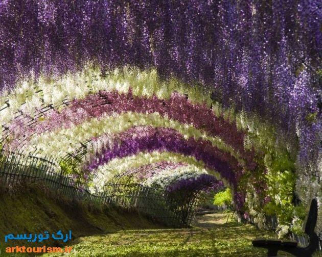 Kawachi-Fuji-Gardens-1.jpg in