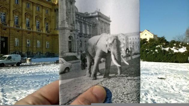 slon-hnk__880