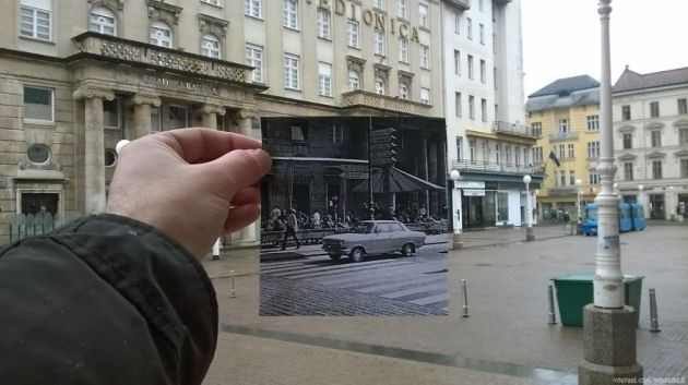 trg-zebra-auto__880