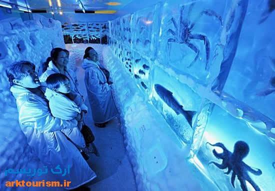 آکواریوم یخی ژاپن (4)