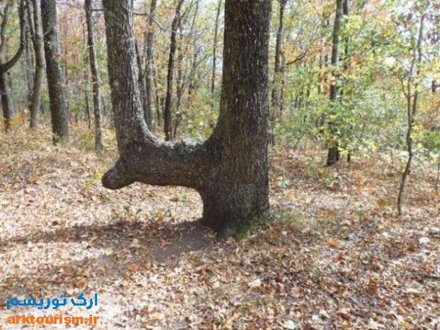 درختان خمیده