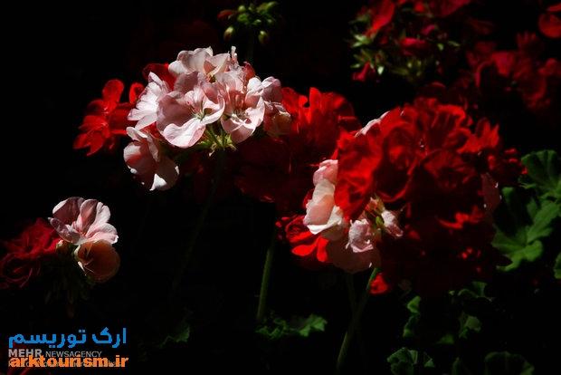 نمایشگاه گل و گیاه تهران (12)