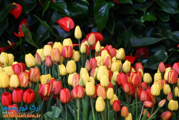 نمایشگاه گل و گیاه تهران (15)