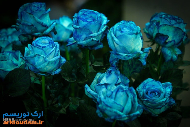 نمایشگاه گل و گیاه تهران (17)