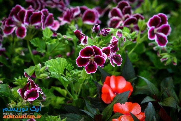 نمایشگاه گل و گیاه تهران (6)