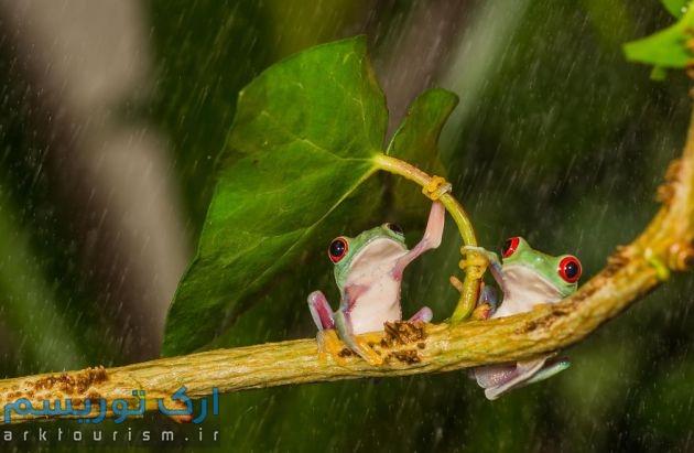 چترهایی از طبیعت (1)