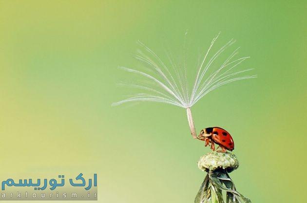 چترهایی از طبیعت (10)