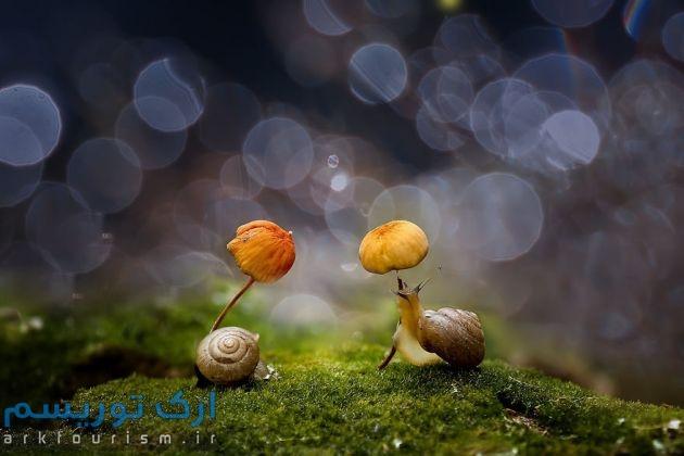 چترهایی از طبیعت (13)