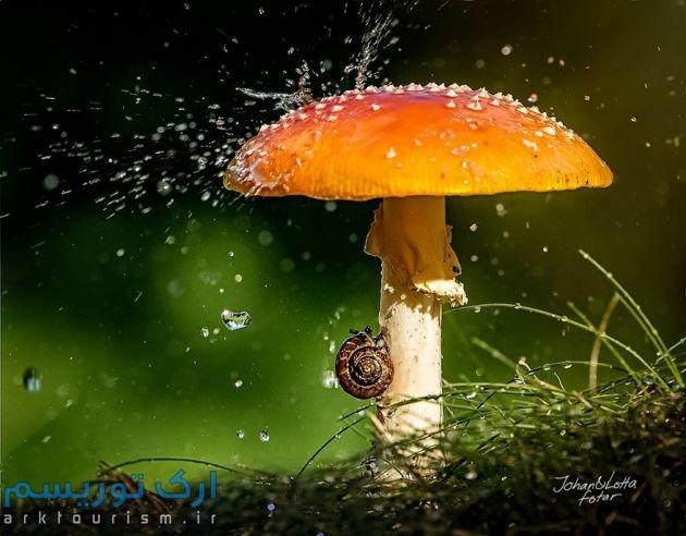 چترهایی از طبیعت (14)