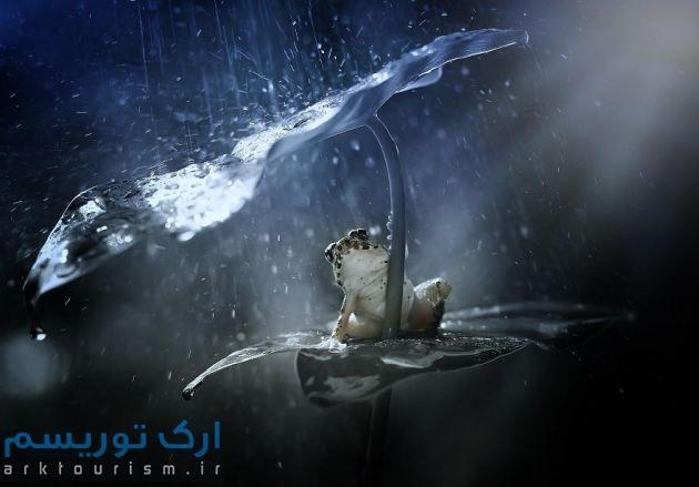 چترهایی از طبیعت (2)