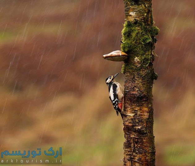 چترهایی از طبیعت (3)