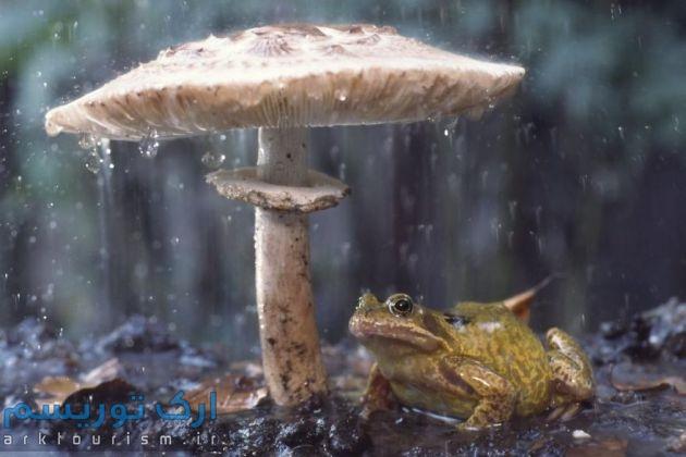 چترهایی از طبیعت (5)