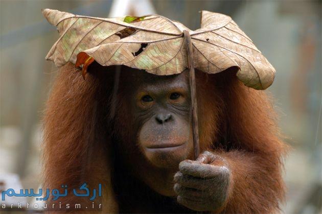 چترهایی از طبیعت (7)