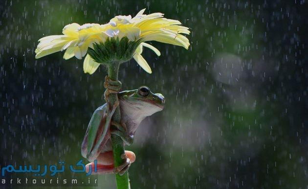 چترهایی از طبیعت (8)