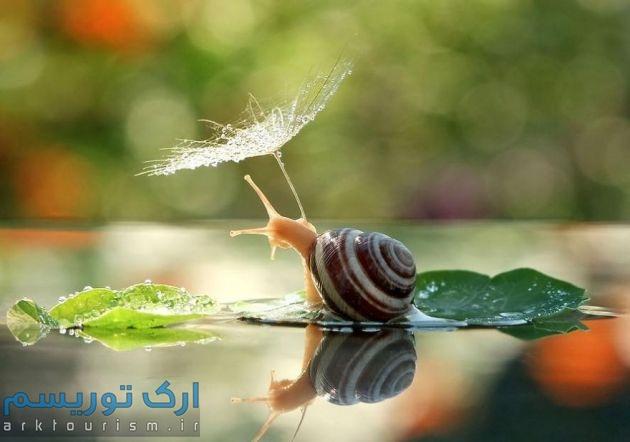 چترهایی از طبیعت (9)