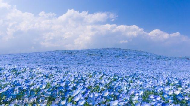 flowers01-750x420