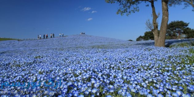 o-HITACHI-SEASIDE-PARK-SPRING-PHOTOS-facebook