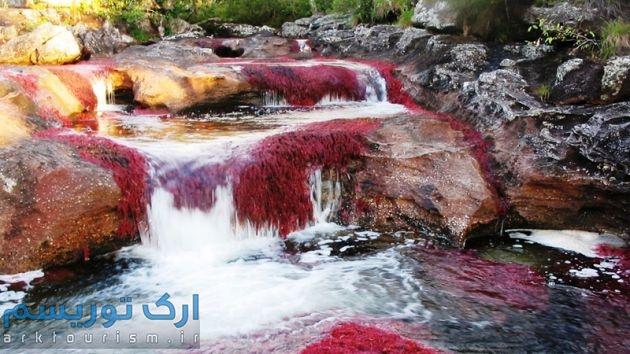 رودخانهکانوکریستال (10)