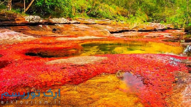 رودخانهکانوکریستال (2)