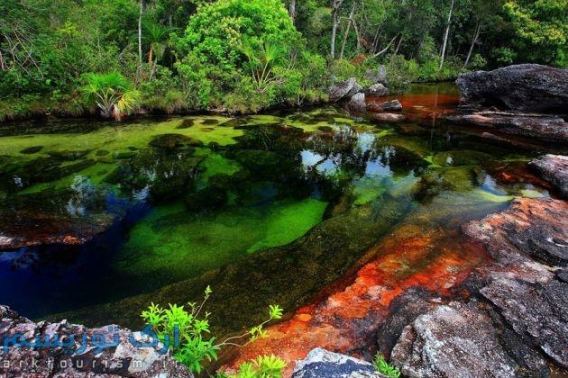 رودخانهکانوکریستال (3)