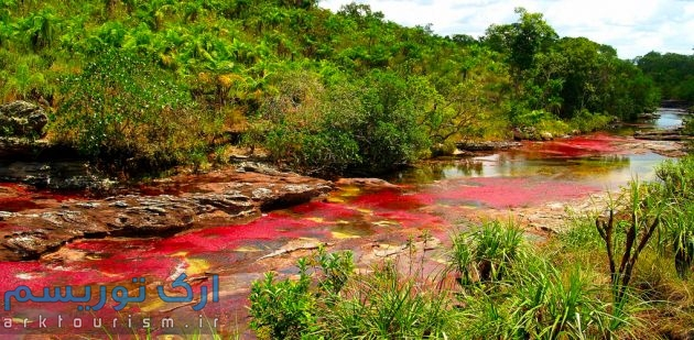 رودخانهکانوکریستال (5)