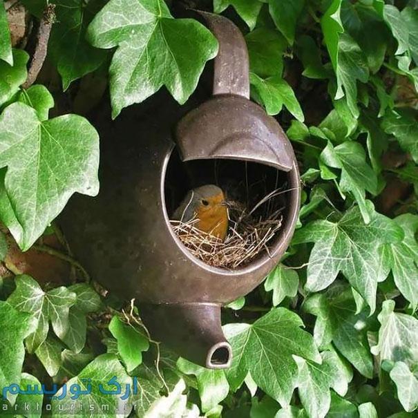 کبوتر (2)