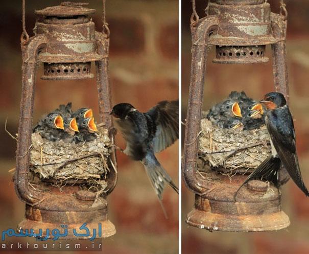 کبوتر (7)