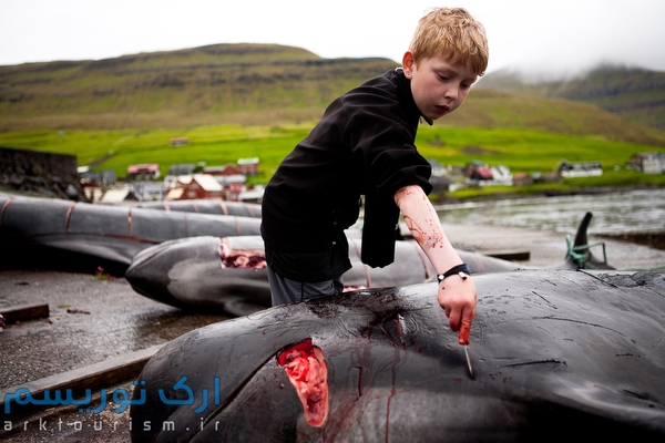 Sam Gleðisheygg, 10, experiments with cutting whale blubber during a whale hunt, or grindadráp, in the village of Syðrugøtu in the Faroe Islands. Though children do not participate in the hunt, they often practice cutting out pieces of leftover whale. Later, their families will teach them how to actually kill the whale by quickly severing the spinal cord, then how to efficiently cut it up for meat.