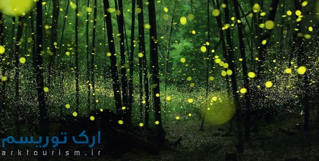 Firefly-park-0-LEAD-990x500