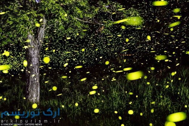 magical-fireflies-wcth11