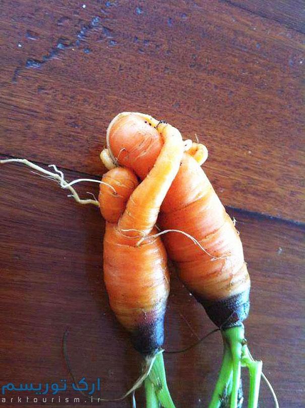 سبزی عجیب (24)