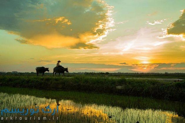 ویتنام (5)
