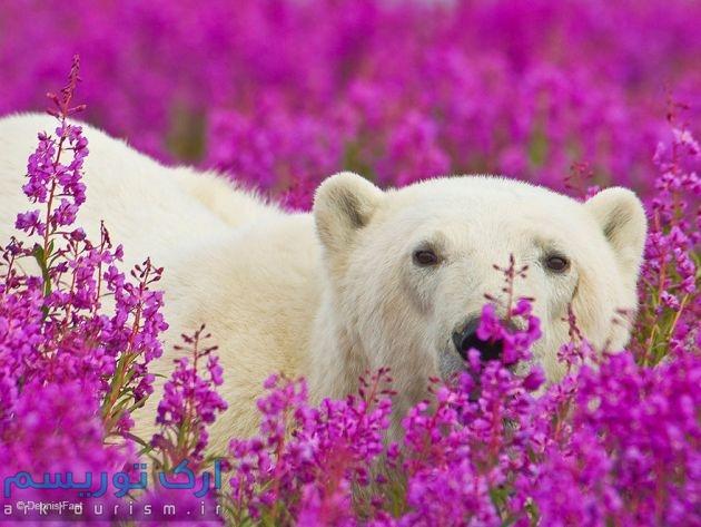 bear (6)
