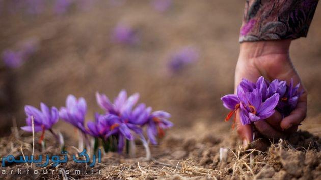 saffron_11072012