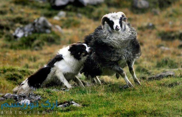 Faroe Island (15)
