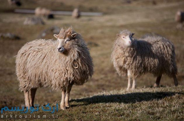 Faroe Island (26)