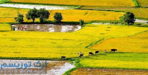 Mekong Delta (3)
