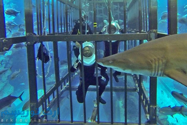 shark-dive-dubai-aquarium